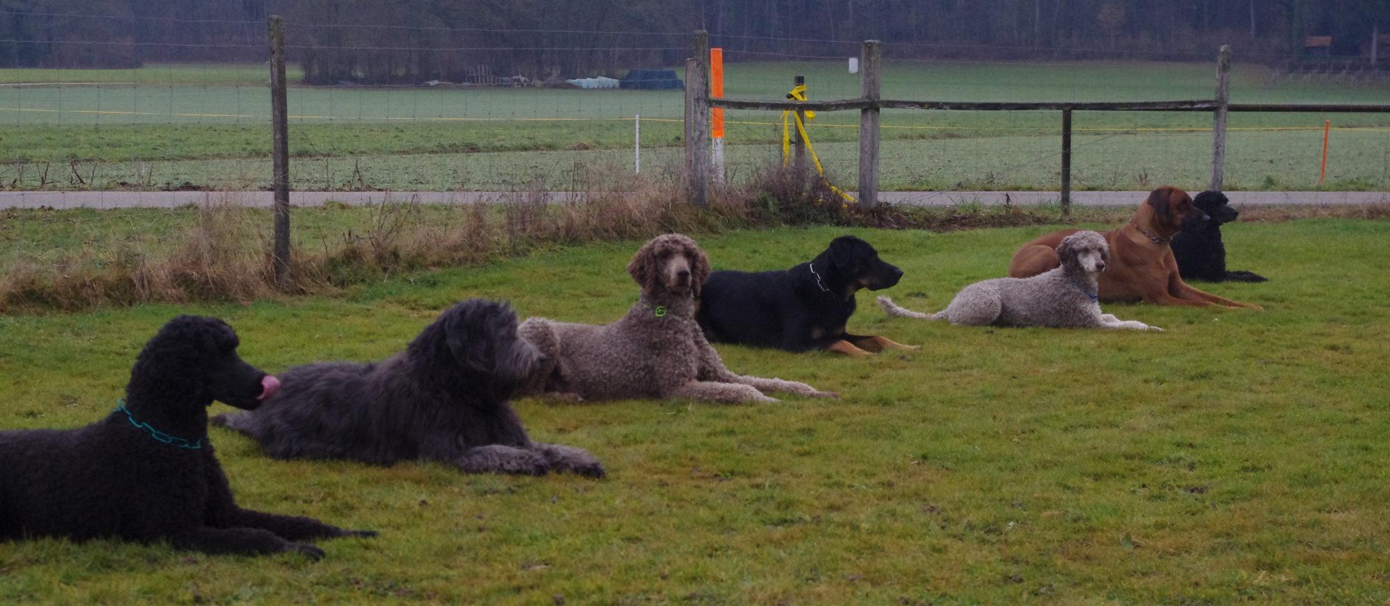 Hundesport Wolfwil